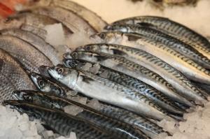 fresh-caught-fish